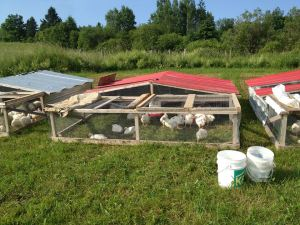 Triple P - Pastured Poultry Pen
