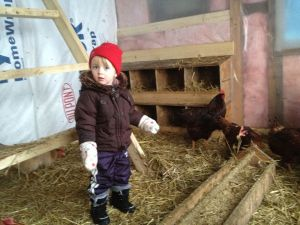 Our little egg eater helping dad take care of the hens.