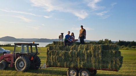 The hay crew