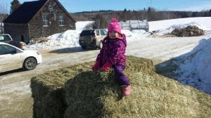 Hay: Fun for all ages.