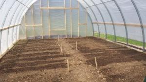 In ground direct seeding has begun